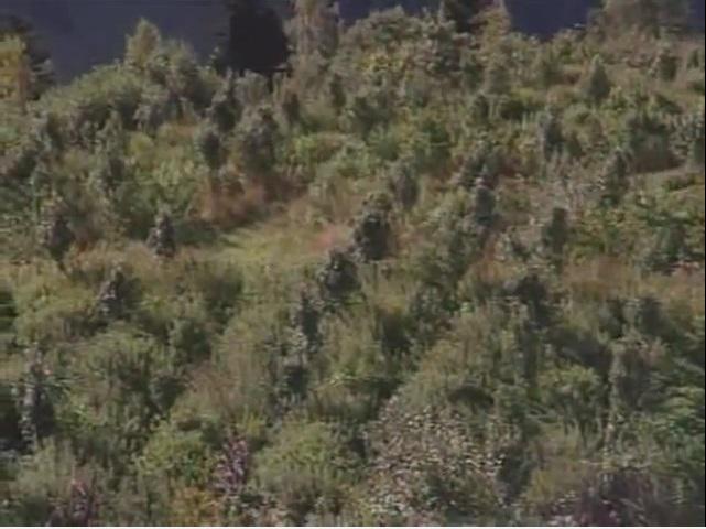 Reportage sur la permaculture cultiver avec la nature for Permaculture terrasses et buttes